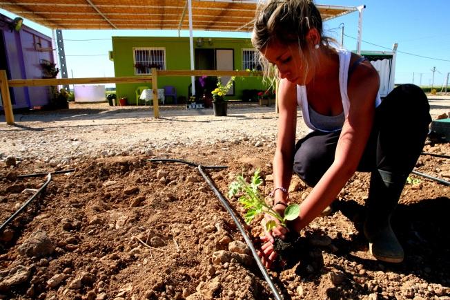 Los huertos urbanos son una alternativa de ocio y ecología
